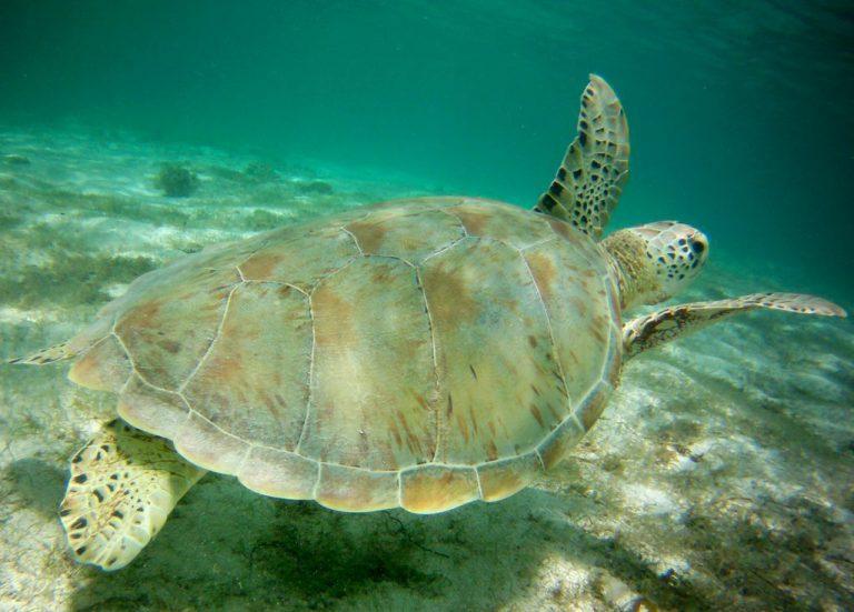 tortue-a-petite-terre